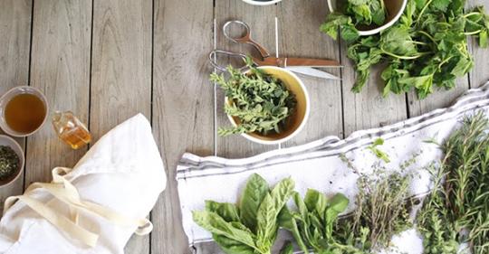 natural plant remedies – Self-help Health